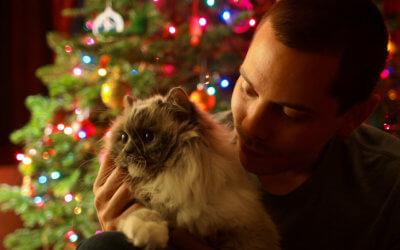 The Twelve Pet Hazards of Christmas