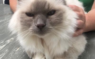 Pet Spotlight: Remy